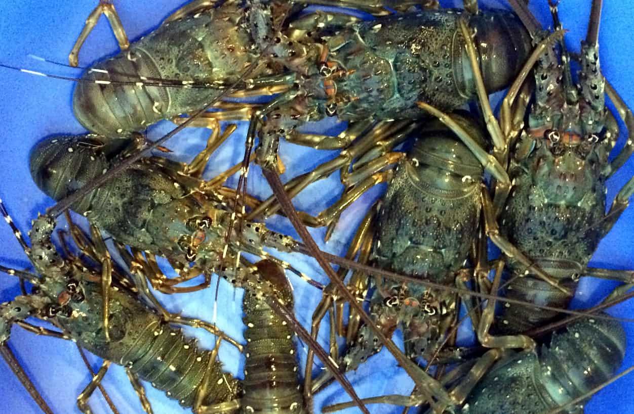 Đặc sản tôm hùm biển An Bàng