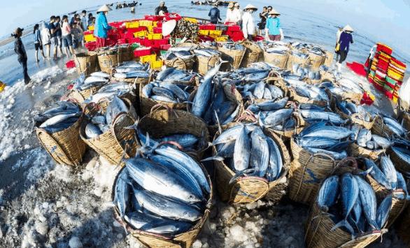 Hải sản tươi ngon tại chợ Phước Hải