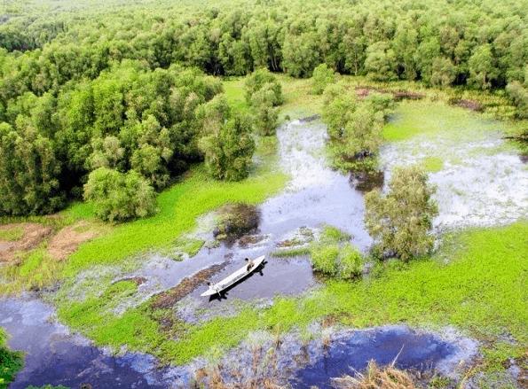 Khung cảnh rừng tràm Trà Sư nhìn từ trên cao