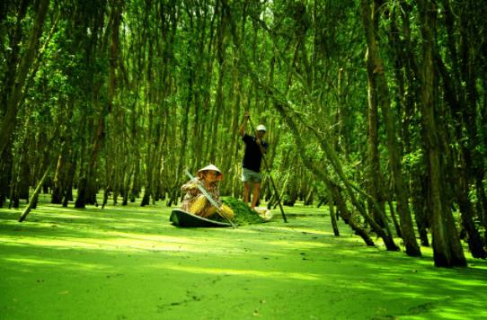 Lưu lại những bức ảnh đẹp tại rừng tràm Trà Sư