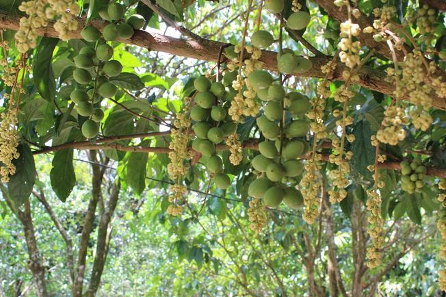 Vườn cây trái (Ảnh sưu tầm)