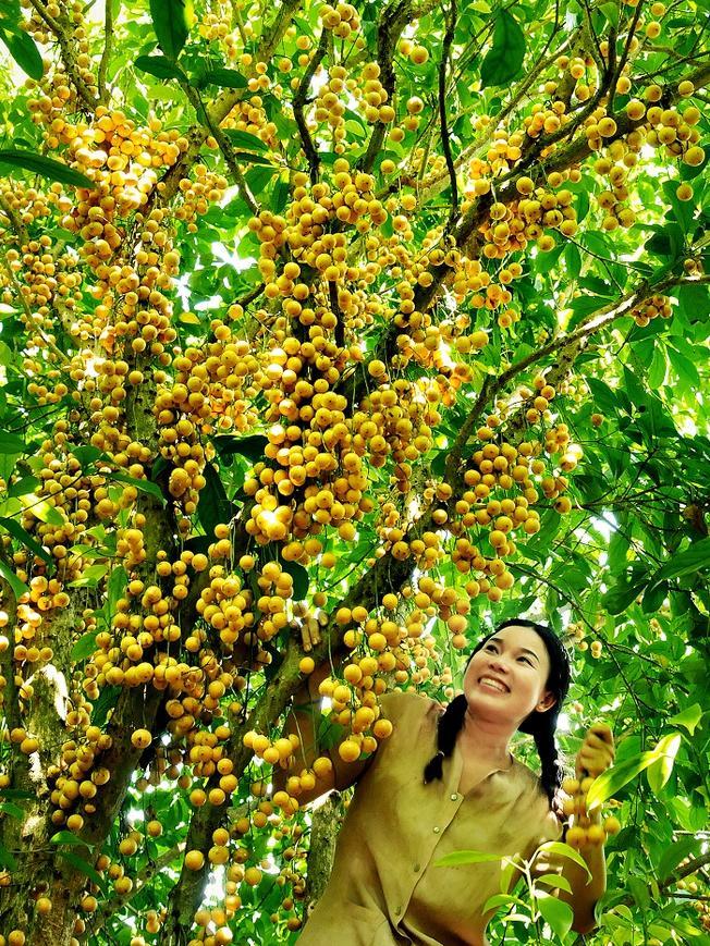 Các vườn trái cây gần thành phố Hồ Chí Minh