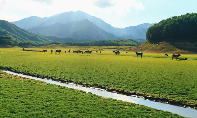 Vào mùa nước cạn, hồ Hòa Trung biến hình thành thảo nguyên xanh tuyệt đẹp