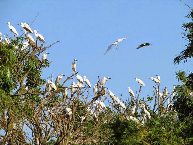Sân chim trong nội thành