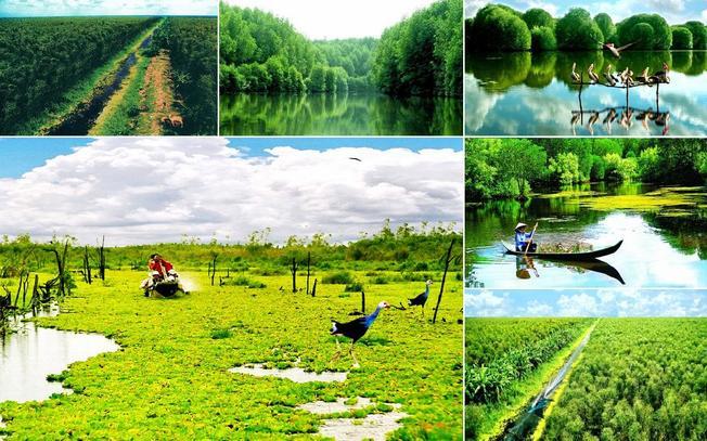 Lạc bước trong rừng U Minh Cà Mau- Cẩm nang du lịch miền Tây