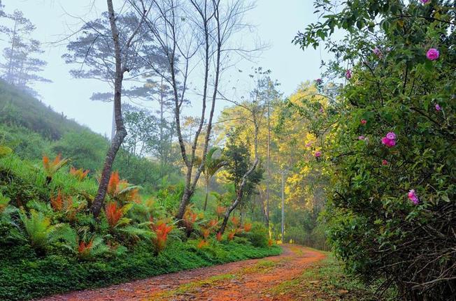 Ma rừng lữ quán là một trong ít những địa điểm đẹp ở Đà Lạt