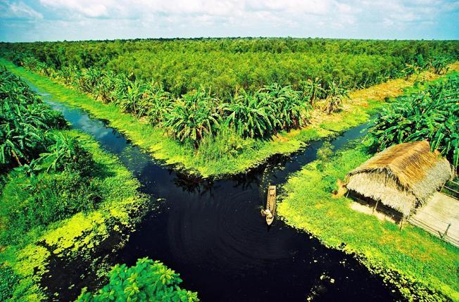 Rừng U Minh Cà Mau