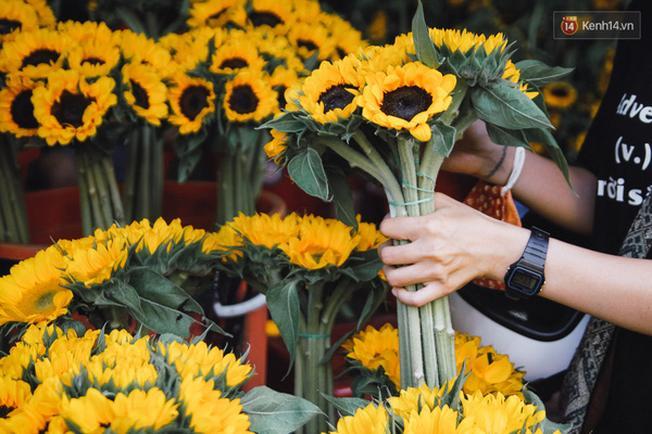 Hoa hướng dương cũng góp phần nhuộm vàng cả một con đường