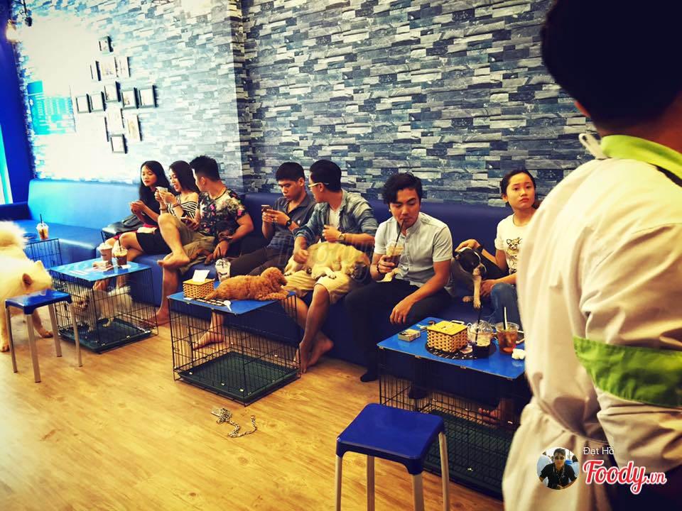 Những quán cafe đẹp ở Đà Nẵng: Saito Pet Cafe