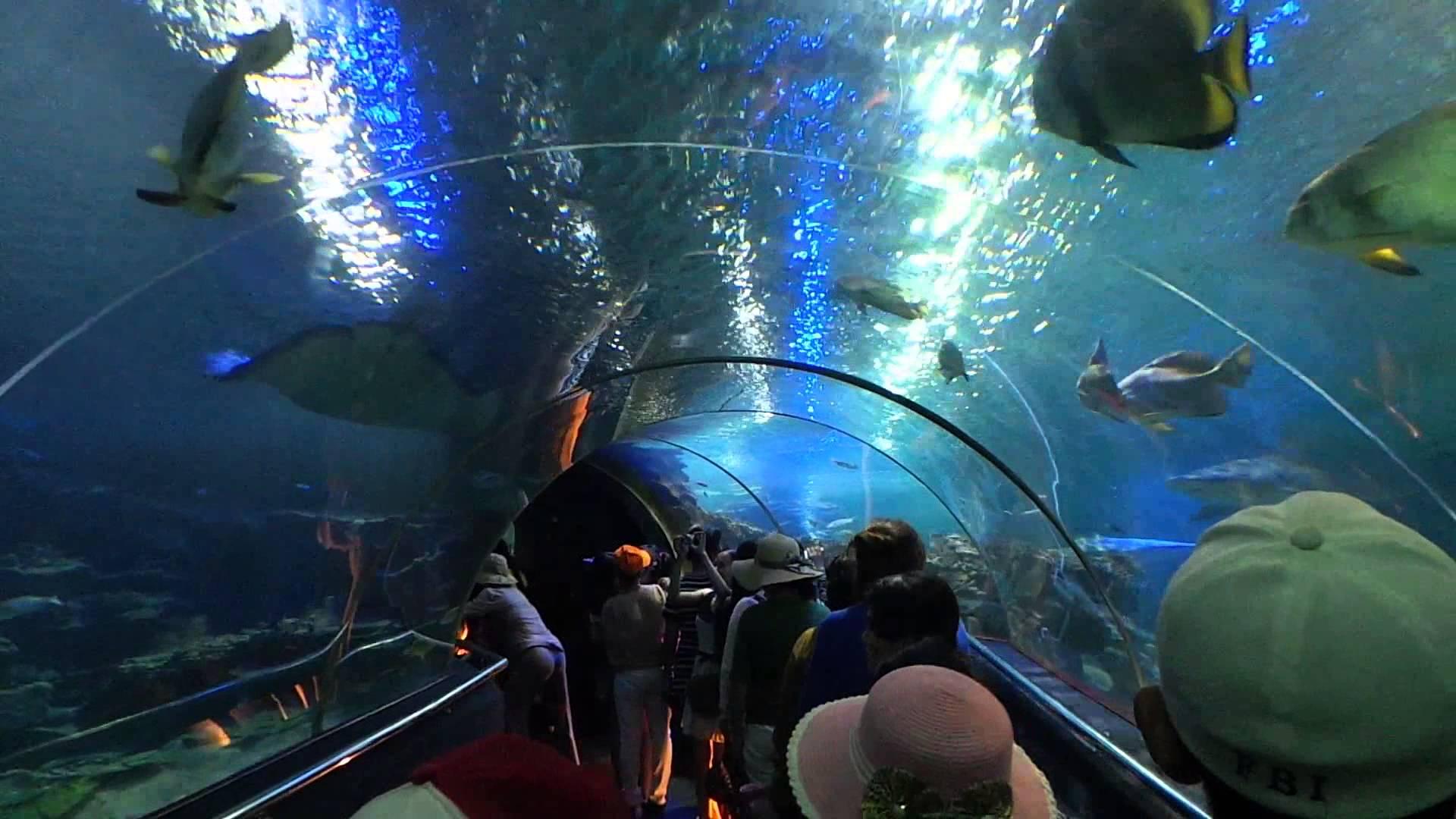 Các bạn trẻ mên mẫn trong thủy cung ở Nha Trang (Ảnh: ST).