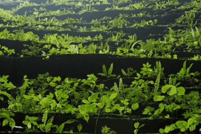 Thảm thực vật đa dạng trong Hang Sơn Đoòng