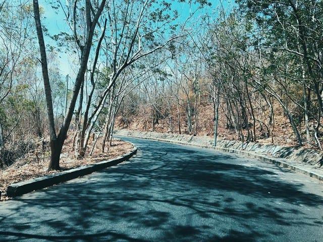 Con đường ở Vũng Tàu mát mẻ và thanh bình (ảnh ST)
