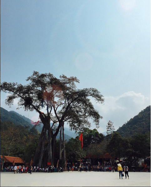 cây đa chín cội du lịch Tam Đảo Tây Thiên