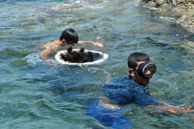 Dịch vụ bắt nhum của nhà nghỉ tại Nam Du rất vui