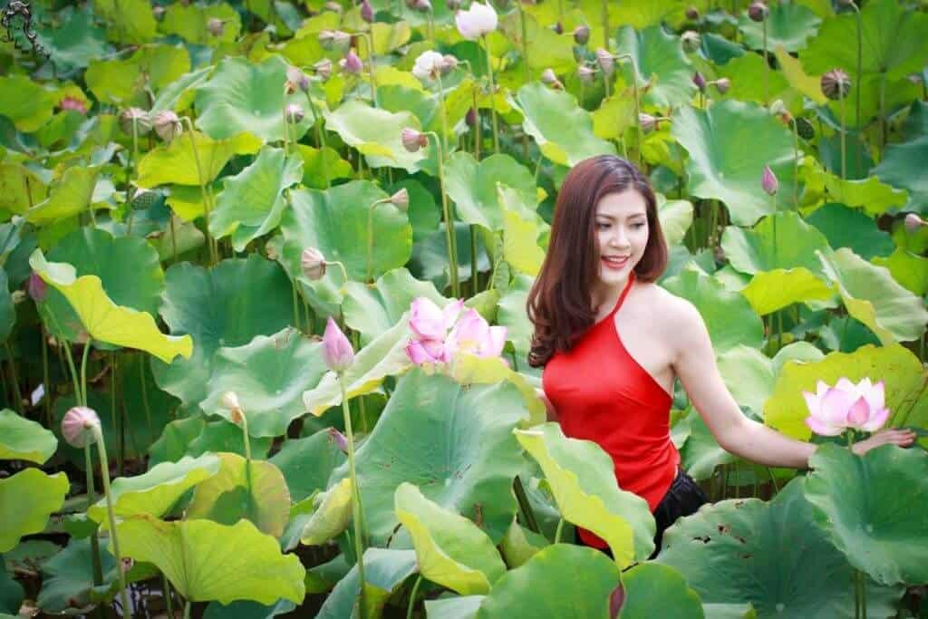 Thiếu nữ chụp ảnh bên đầm sen hồ Tây