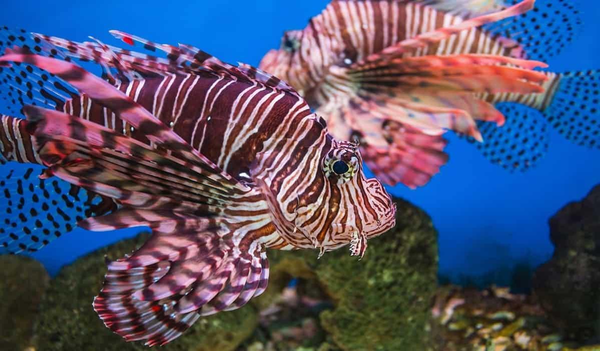 Trực tiếp ngắm nhìn những loại cá lạ mắt chỉ có thể thấy tại viện hải dương.