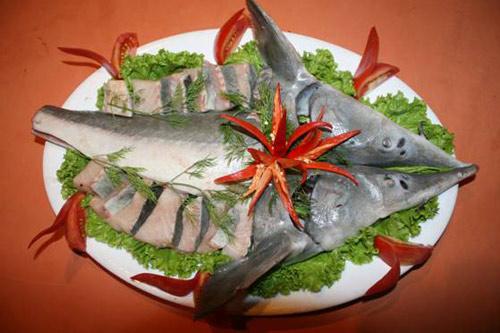 cá tầm - đặc sản Tam Đảo