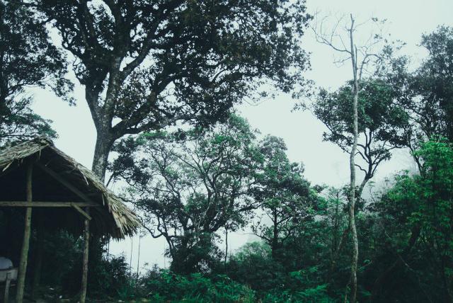 vườn Quốc gia Tam Đảo - cắm trại ở Tam Đảo 3