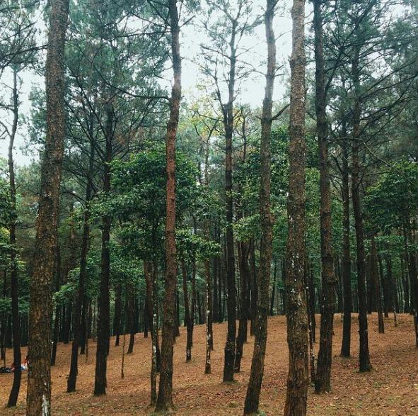 chụp ảnh ở Ba Vì với rừng thông