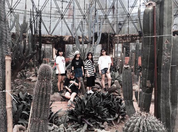 vườn ươm xương rồng khi chụp ảnh ở Ba Vì