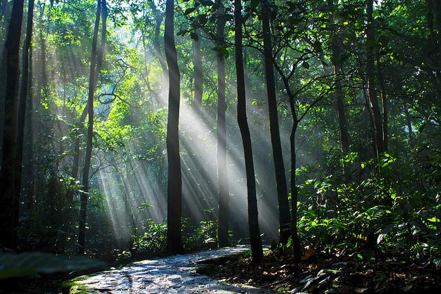 Vườn quốc gia Ba Vì-du lịch Ba Vì 1 ngày