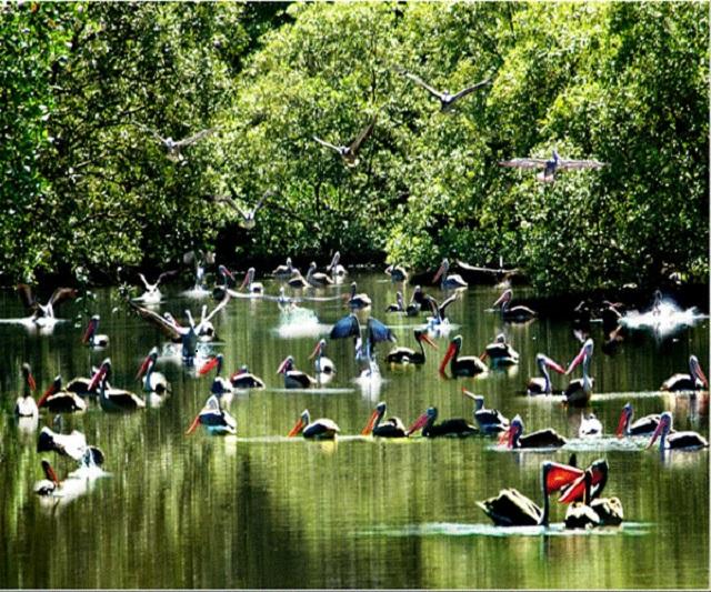 Du lịch đất mũi Cà Mau với nhiều động vật phong phú