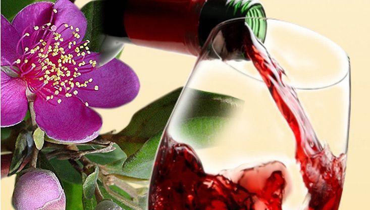 Rượu sim hấp dẫn (Ảnh: ST)