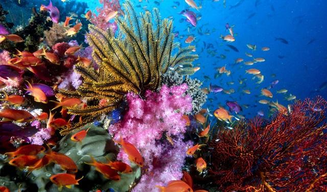 Khu đảo san hô không cách xa thành phố phú quốc là mấy
