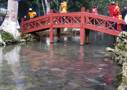 Suối cá Thần Cẩm Lương Thanh Hóa