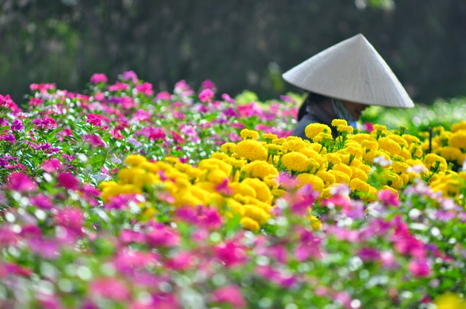 Sắc hoa rực rỡ ngày giáp tết (nguồn sưu tầm)