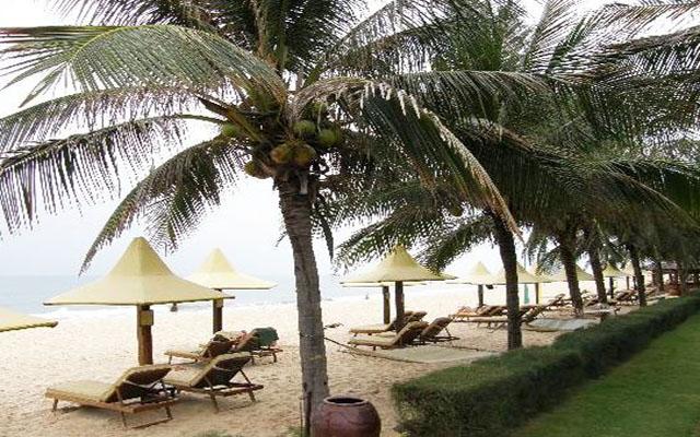Rặng dừa trải dài bên bờ biển Thạch Hải