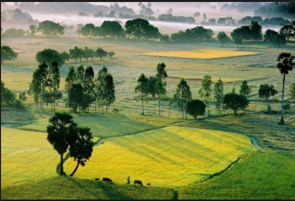 Cánh đồng Tà Pạ - An Giang