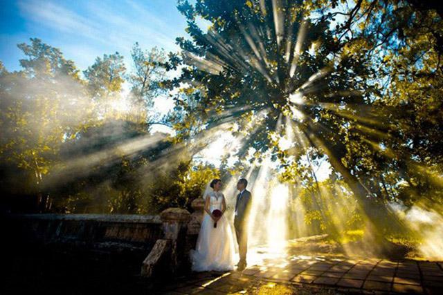 Cây đa nghìn năm tạo nên một bối cảnh chụp ảnh cưới hết sức thú vị