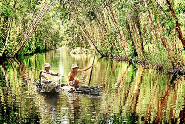 Về Cà Mau du lịch những tán cây Tràm phủ bóng xuống mặt nước sáng như gương