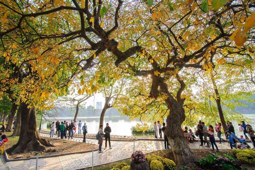 Hà Nội mùa thu, cây cơm nguội vàng, cây bàng lá đỏ..