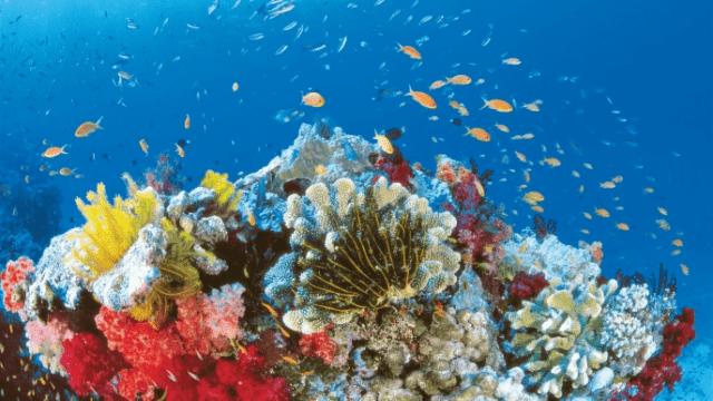 Kinh nghiệm du lịch Nha Trang tại viện hải dương học