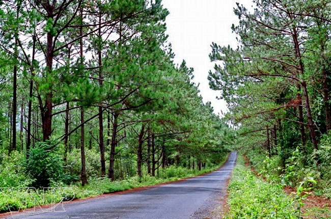 KHu sinh thái rừng Măng Đen