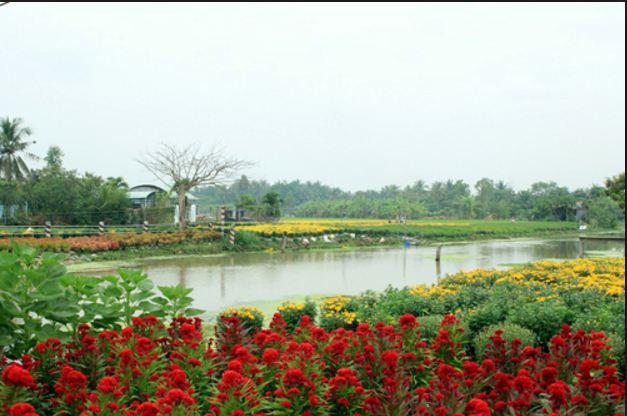Choáng ngợp bởi sắc đỏ, sắc vàng và sắc xanh của làng hoa Mỹ Phong