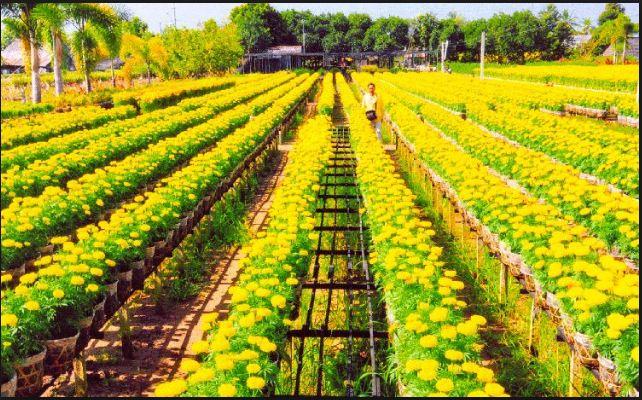 Vườn hoa của mình ra đúng dịp nở rộ