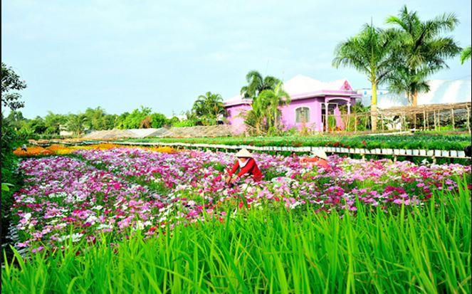 Một góc của làng hoa Tân Quy Đông - Sa Đéc