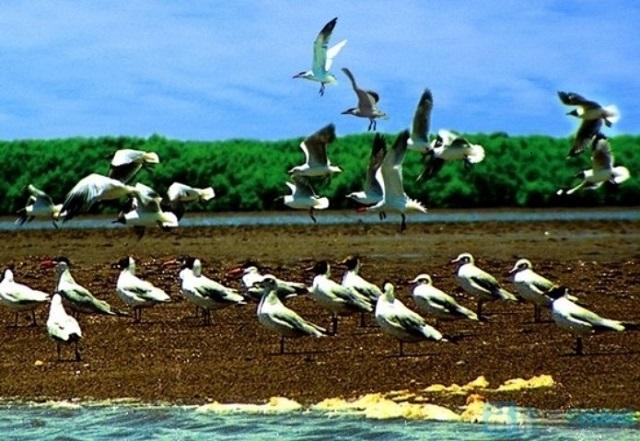 Hàng đàn chim bay lượn tạo nên bức tranh sống động