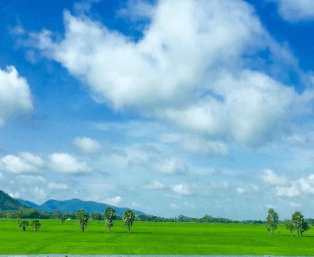 Màu xanh tuyệt đẹp trên cánh đồng Tà Pạ