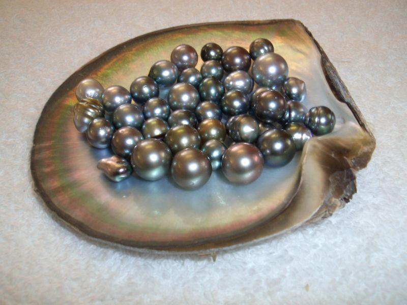 Ngọc trai đen đắt giá nhất trong các loại ngọc trai (Ảnh: ST)