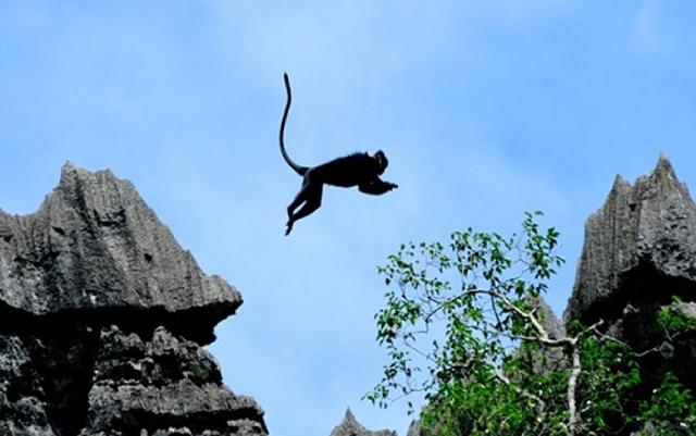 Phong Nha Kẻ Bàng - nơi trú ngụ của nhiều động vật quý hiếm