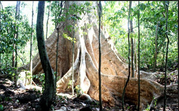 Rừng nam cát tiên có gì ? Các tuyến sinh thái tự nhiên tại Cát Tiên