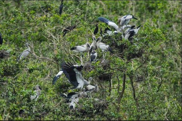Rừng chim của Rừng tràm Trà Sư