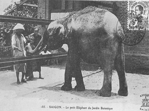 Con voi tại vườn thú Thảo Cầm Điền xưa kia