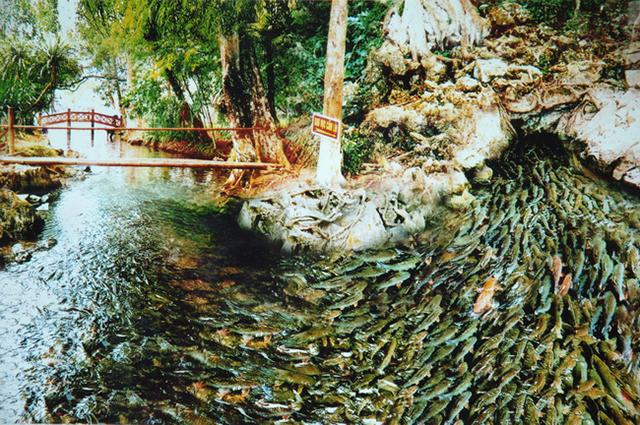 Du lịch Thanh Hóa: suối cá thần cẩm thủy