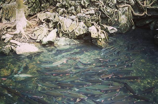 di lịch thanh hóa: suối cá thần cẩm thủy-01