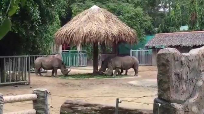 Những con Tê giác được bảo tồn trong Thảo Cầm Viên